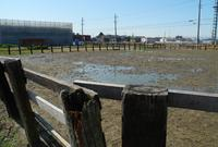 厩舎があるところの写真・動画_image_24701