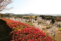 瀬戸公園の写真・動画_image_25403