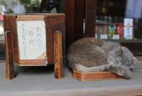渋谷氷川神社の写真・動画_image_31633