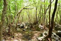 清流の森の写真・動画_image_47729