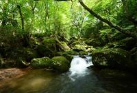 清流の森の写真・動画_image_47730