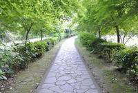 武雄神社(武雄五社大明神)の写真・動画_image_58161