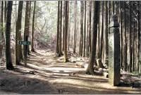 丹生官省符神社の写真・動画_image_67745
