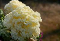 いつも花が咲いているの写真・動画_image_79954