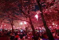 桜の名所の写真・動画_image_79964