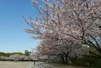 鶴舞公園陸上競技場の写真・動画_image_79968