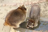 万力公園の写真・動画_image_132236