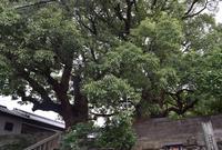 山王神社の写真・動画_image_150085