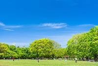 代々木公園の写真・動画_image_759284