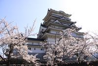 勝山城博物館の写真・動画_image_413744