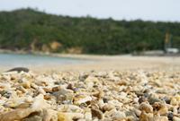 海辺の写真・動画_image_175930