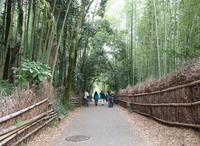 竹林の小径の写真・動画_image_890387