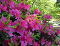 いつも花が咲いているの写真・動画_image_32664