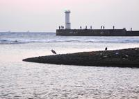 海にやって来ましたの写真・動画_image_124768