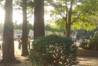 万代池公園の写真・動画_image_135056