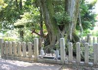徳川家康最後陣跡の写真・動画_image_104765