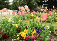 いつも花が咲いているの写真・動画_image_32663