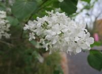 いつも花が咲いているの写真・動画_image_189106