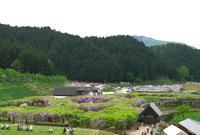 白井大町藤公園の写真・動画_image_30047