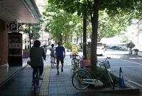 中央通り(マロニエの並木路)の写真・動画_image_139851