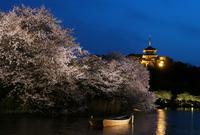 三溪園の写真・動画_image_311638