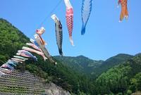 白井大町藤公園の写真・動画_image_32987