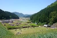 白井大町藤公園の写真・動画_image_32988