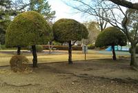 豊川公園の写真・動画_image_574571