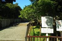 成田山公園の写真・動画_image_673735