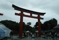 鶴岡八幡宮の写真・動画_image_814359