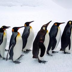 旭川市 旭山動物園
