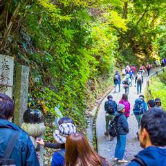 高尾山の一番人気の登山コース「自然研究路1号路」を紹介!