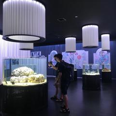【NIFRELの楽しみ方完全ガイド】観光やデートにおすすめの情報や周辺情報も満載!