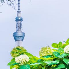 【2020年6月版】東京の定番観光スポットを紹介!