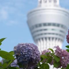 【2020年6月版/東京一人旅】一人旅におすすめの観光スポット!