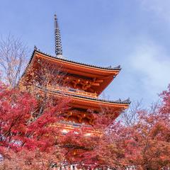 秋の京都を楽しむ!秋のおでかけおすすめプランを紹介