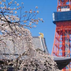 東京旅行ガイド!人気エリアや見どころ・アクセス情報が満載!