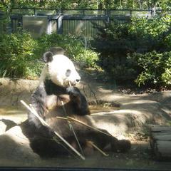 【上野動物園の楽しみ方完全ガイド】観光やデートにおすすめの情報や周辺情報も満載!