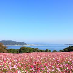 【カップルで行く福岡観光】デートにおすすめの福岡観光スポットを紹介!