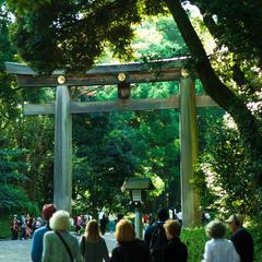 【明治神宮の観光ガイド】参拝コースやパワースポット情報をご紹介!