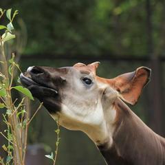【よこはま動物園ズーラシアの楽しみ方完全ガイド】観光やデートにおすすめの情報や周辺情報も満載!