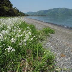 湖西の風景