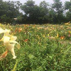 岡本自然農園
