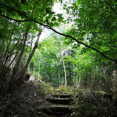 段戸裏谷原生林(きららの森)