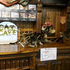 Gallery Alice's Tearoom