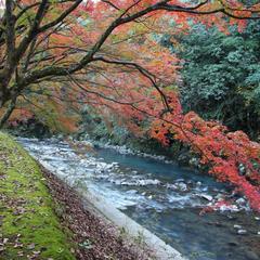 青井岳自然公園