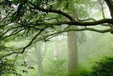 屋久島自然休養林(ヤクスギランド)