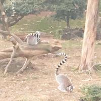 伊豆シャボテン公園の写真・動画_image_342831