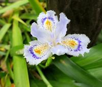 いつも花が咲いているの写真・動画_image_189089