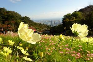 草花と香りのテーマパーク♡癒しのハーブガーデン♡神戸布引ハーブ園へ